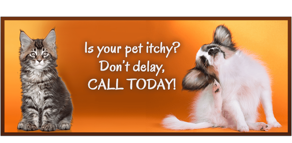 Is your pet itchy? Don;t delay, Call Today!